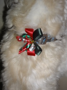 3 - A Christmas bow on Toby's collar!