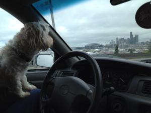 Toby's 1st drive through Seattle