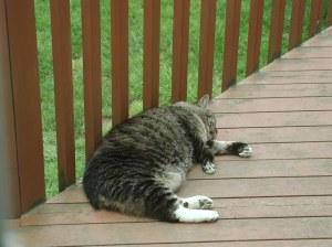 Sleeping on the deck!