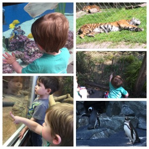 Visiting the Zoo