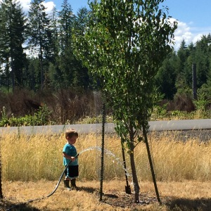 Helping water the fruit trees