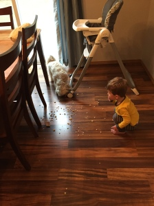 This is what happens when the high chair tray of cereal gets flipped over. Owen and Toby are racing to eat all the pieces off the floor. Gotta love my little vacuum cleaners.