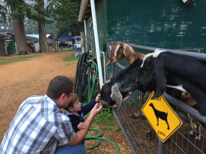 Feeding and petting the goats